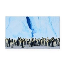 EMPEROR PENGUIN COLONY (APTEN Rectangle Car Magnet