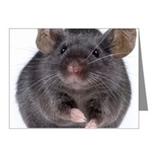 Gray mouse (Mus musculus) Note Cards (Pk of 20)