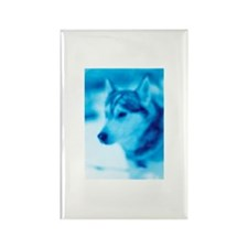 A Siberian Husky. Rectangle Magnet (100 pack)