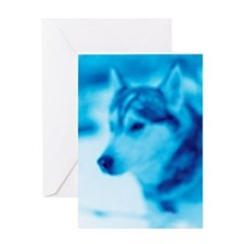 A Siberian Husky. Greeting Card