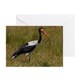 Saddle-billed Stork with Greeting Cards (Pk of 10)