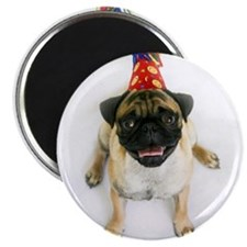 "Birthday Pug 2.25"" Magnet (100 pack)"