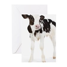 Calf Greeting Cards (Pk of 20)