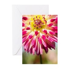 Dahlia, Oregon, USA Greeting Cards (Pk of 20)