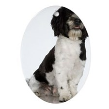 Studio portrait of Havanese dog pu Ornament (Oval)