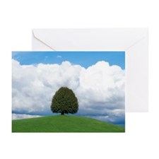 isolated tree Greeting Cards (Pk of 20)