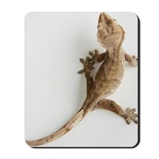 Crested gecko lizard Mousepad