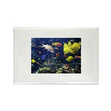 Tropical fish in giant Rectangle Magnet (100 pack)