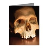 Skull Note Cards (Pk of 10)