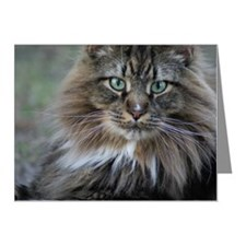 Maine Coon Sitting on Lawn Note Cards (Pk of 20)