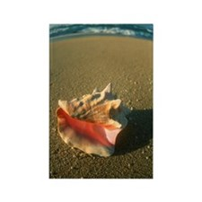 An empty conch shell Rectangle Magnet