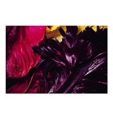 Parrot tulips Postcards (Package of 8)