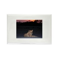 Young Lion at Sunrise Rectangle Magnet (10 pack)