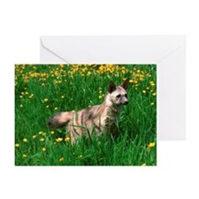 Aardwolf Greeting Cards (Pk of 20)