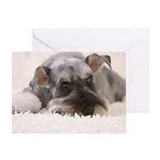 Schnauzer, Studio Shot Greeting Card