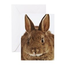 Pet rabbit, close-up of  Greeting Cards (Pk of 20)