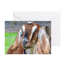 Nubian goat, Capra hircu Greeting Cards (Pk of 20)