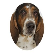 Portrait of a bassett hound Ornament (Oval)