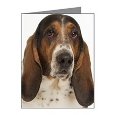 Portrait of a bassett hound Note Cards (Pk of 10)
