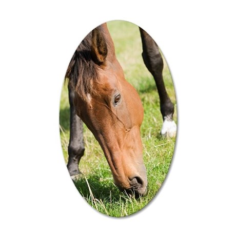 Horse grazing 35x21 Oval Wall Decal