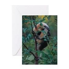 Lesser Anteater Climbs Tree Greeting Card