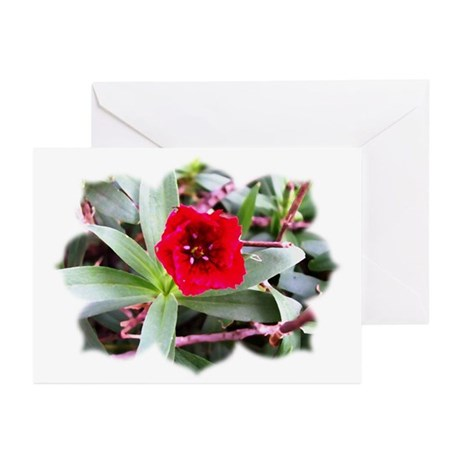 Red Flower Greeting Cards (Pk of 10)