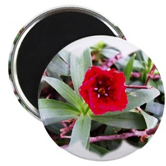 "Red Flower 2.25"" Magnet (10 pack)"