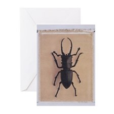 Stag Beettle Greeting Cards (Pk of 20)