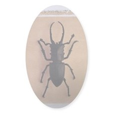 Stag Beettle Decal