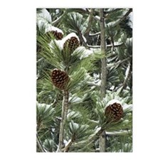 Snowy pine tree Postcards (Package of 8)