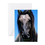Spanish mustang (Equus c Greeting Cards (Pk of 20)