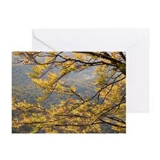 Yellow fall foliage Greeting Cards (Pk of 20)