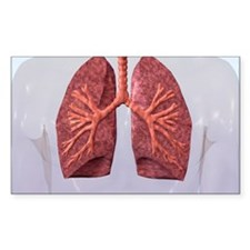 Human Lungs Decal