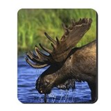 Side view of moose in water Mousepad
