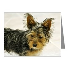 Puppy yorkie with big ears Note Cards (Pk of 10)