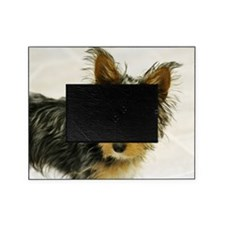 Puppy yorkie with big ears Picture Frame