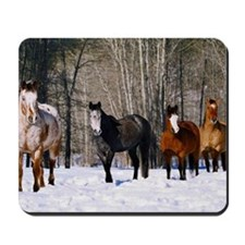 Appaloosa and quarterhorses in snow Mousepad