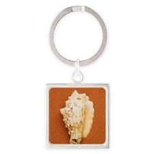 Seashell Square Keychain