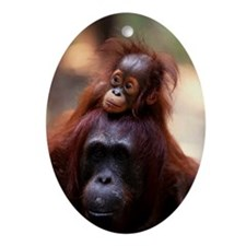 Baby Borneo orangutan on mother Ornament (Oval)