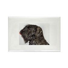Bouvier des Flandres (c Rectangle Magnet (10 pack)