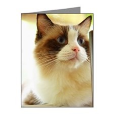 Close-up of a cat (Ragdoll) Note Cards (Pk of 20)
