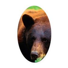 Black bear (Ursus americanus) in t Oval Car Magnet