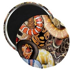 "Snake Collage 2.25"" Magnet (100 pack)"
