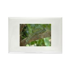 Double-crested Basilisk Rectangle Magnet (10 pack)