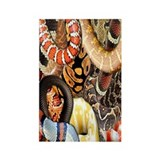 Snake Collage Rectangle Magnet (10 pack)
