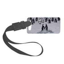African Penguins on seashore , S Luggage Tag