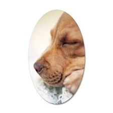 Sleeping pit bull puppy Wall Decal