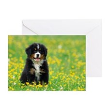 Portrait of Puppy Greeting Cards (Pk of 10)