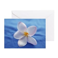 Plumeria Flower on a Blu Greeting Cards (Pk of 20)