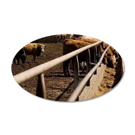 Cows eating 35x21 Oval Wall Decal